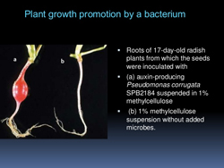 Growth Promotion & Protection for Root Rot