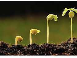 Growth Promotion & Seed Germination Enhancer